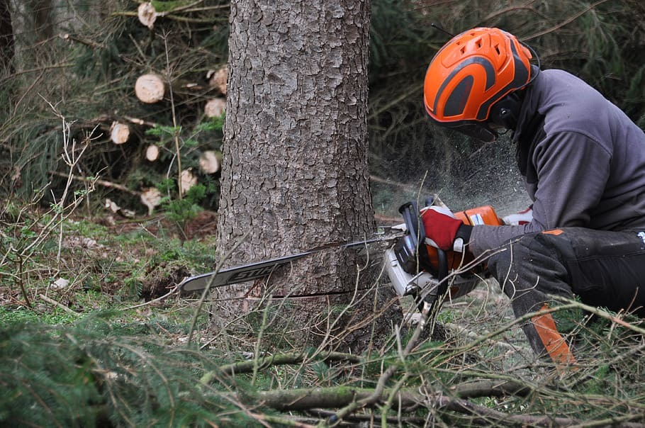 A person cutting a tree with a chainsaw